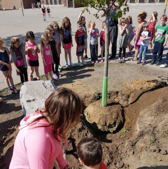 Students gather in a school yard as a tree is planted